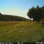 Trail Camera Photos